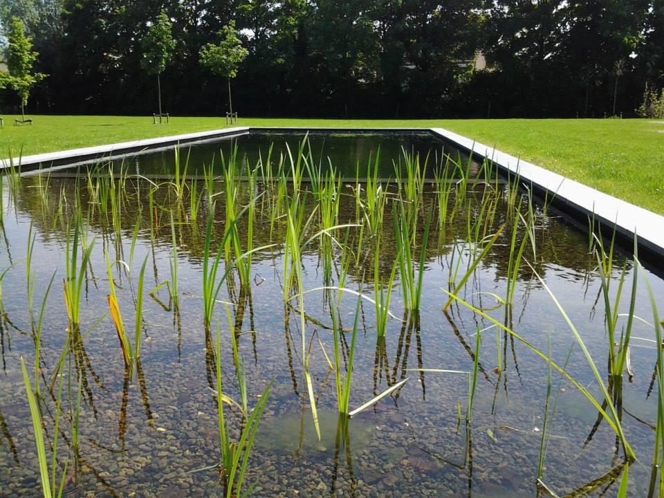 Zwemvijvers aangelegd door balans tuinen for Zwemvijver afmetingen